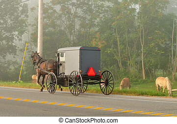 Amish horse and buggy on the road - Amish horse and buggy on...