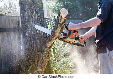 corte, árbol