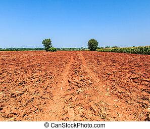 tierra, tierra, preparación, nuevamente, arado,...