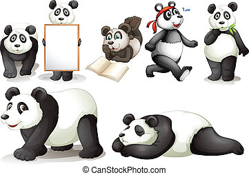 Seven pandas - Illustration of the seven pandas on a white...
