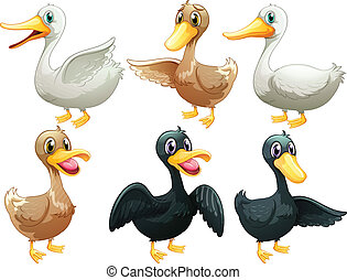 Ducks and geese - Illustration of the ducks and geese on a...