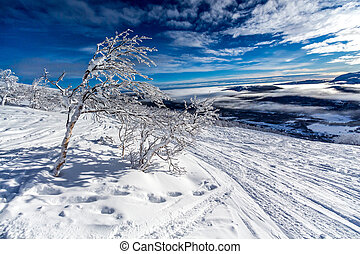 bright bush - A snowy Lappland landscape in the north part...