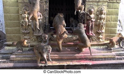 monkey on swayambhunath stupa altar - monkey group on...