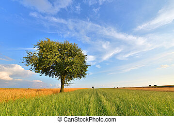 summer landscape with lone tree