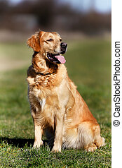Purebred dog - Beautiful purebred dog standing up outside...