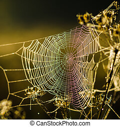 Drops of dew on a web shined by morning light