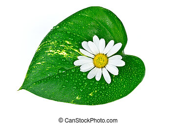 spa concept, white flower with green leaf