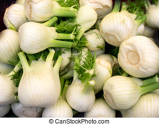 Bunch of fresh fennel bulb