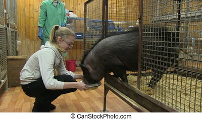 petting zoo - girl feeding small black pig