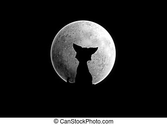 Moon - Black silhouette of a cat which sits under the moon