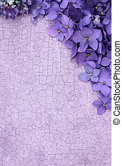 Purple Floral Background - Purple Hydrangea blossomes over a...