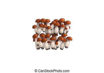 Boletus mushroom symbol = on white background - Boletus...