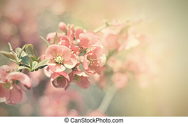 Vintage flowers. Antique style photo of tree flowers with...