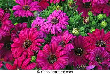 purple flowers and daisies from the florist for sale -...
