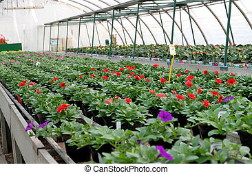 great greenhouse for the cultivation of flowers in a...