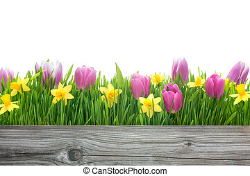 spring tulips and daffodils flowers with copy space for your...