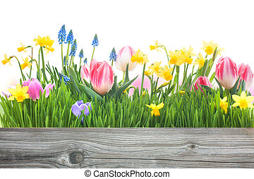 spring flowers with copy space for your message