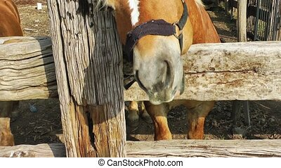 Horse is Scratching
