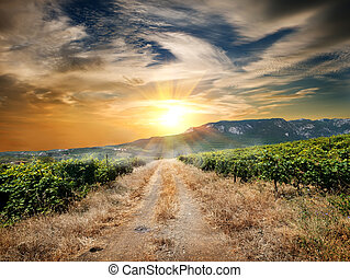 Road through a vineyard - Country road through a vineyard in...