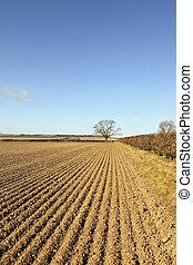 springtime patterned landscape - agricultural landscape in...