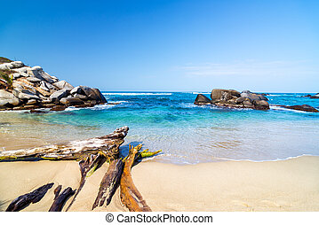 Beach and Driftwood - Beach and driftwood in Tayrona...