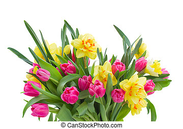 bunch of pink tulips and yellow daffodils - bunch of pink...