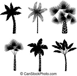 Decorative palm trees collection isolated vector...