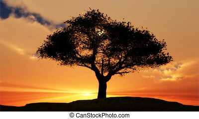 (1076) Sentinel Tree Sunset - Great sunset animation with...