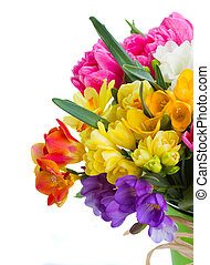 freesia and daffodil flowers - multicolored freesia and...