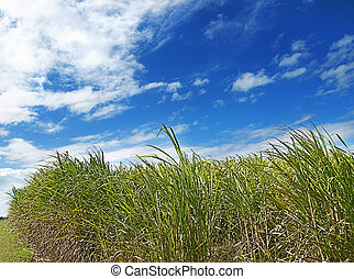 Windy day landscape scene - Windy day scene with long green...