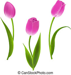 Pink Tulips, With Gradient Mesh, Vector Illustration