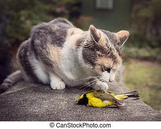 Calico Cat with captured Wild Bird - Calico cat up close...