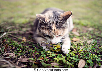 Calico Cat with captured Song Bird - Closeup frontal view of...