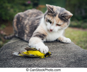 Calico Cat Holding Dead Song Bird - Calico Cat with...