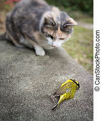 Calico Cat with Dead Song Bird - Calico Cat with its...