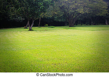Beautiful bright green lawn & trees at lalbagh botanical...