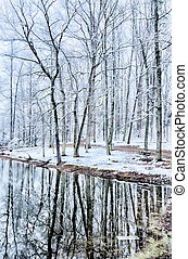 tree line reflections in lake during winter snow storm