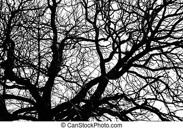 branches - Silhouette of bare tree branches in park in...