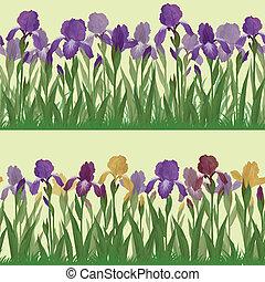 Flowers iris, set seamless