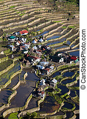 Rice Terraces, Philippine - The world heritage Rice terraces...
