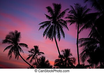 Palm tree silhouette at sunset in Bohol Philippines