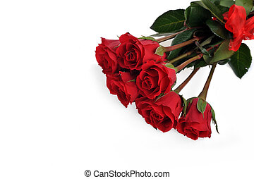 red roses and ring isolated on white
