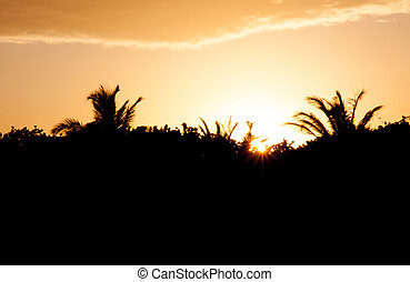 Sunset in the jungle - Sun is dropping down in the jungle