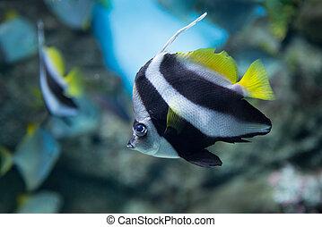 Tropical fish at Moscow Oceanarium - Amazing tropical fish...