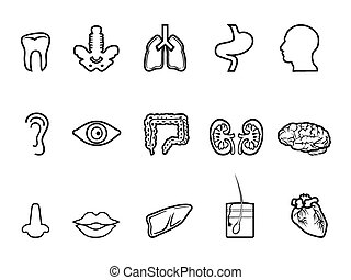black human anatomy outline icon - isolated black human...
