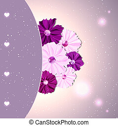 Springtime Colorful Cosmos Flower on Purple Pink Background...