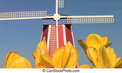 Windmill in Tulip Field - Windmill in the middle of a tulip...
