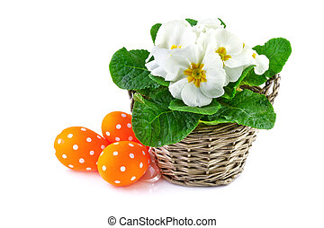 spring flowers in basket and easter eggs, isolated on white