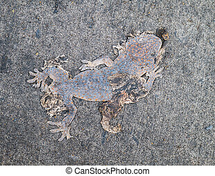 Dead body of gecko on street