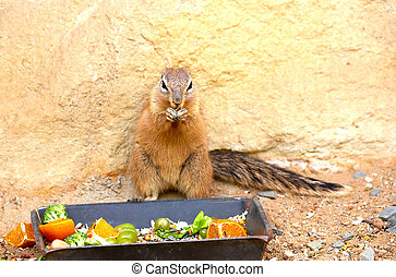 Exotic squirrel Sort : Xerus inauris